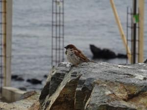 A bird by the shore