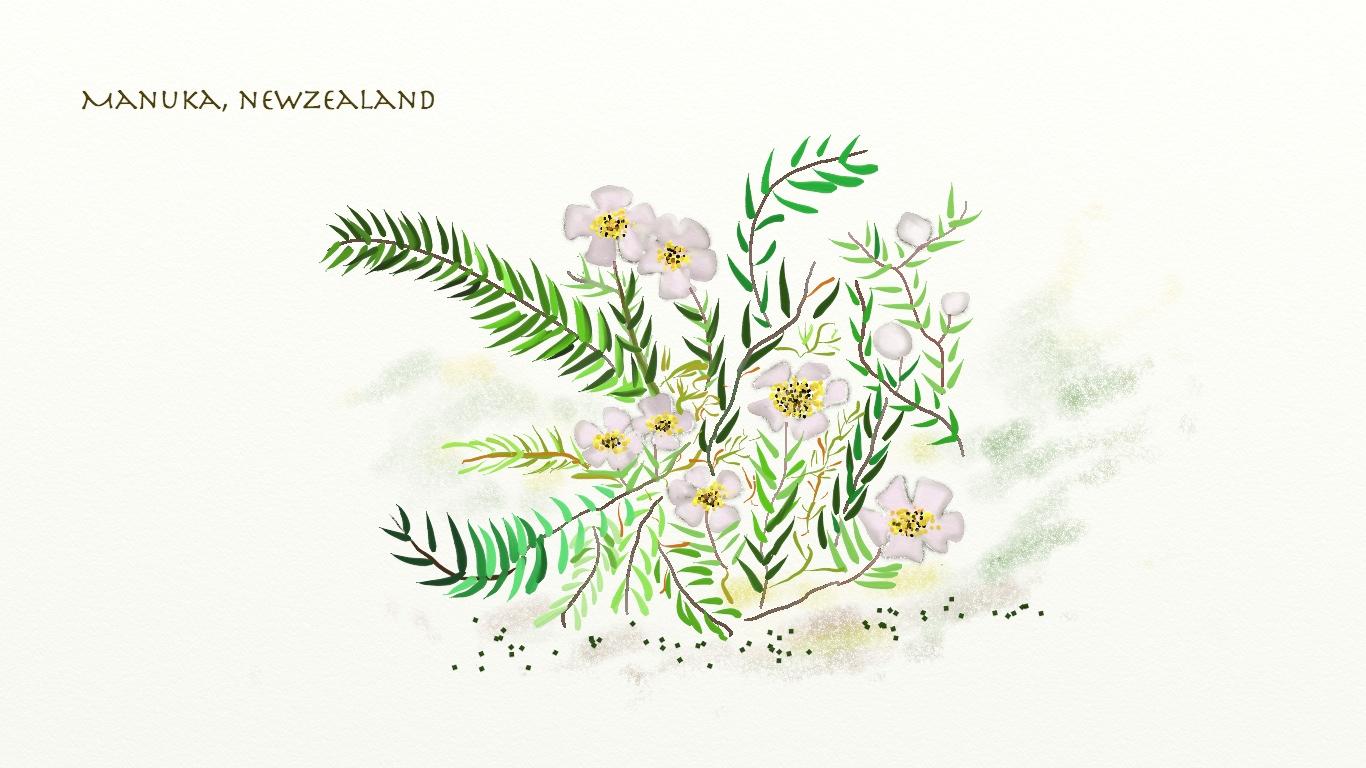 Manuka, NZ